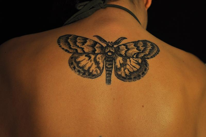 Gypsy Moth