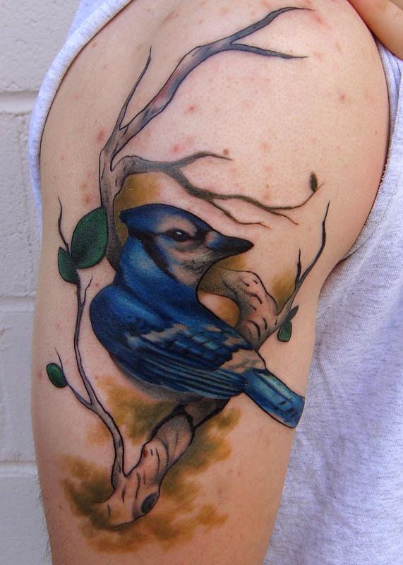 Bluejay on birch branch