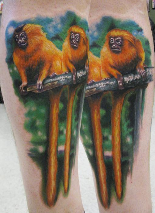 Steve Wimmer - golden lion tamarins