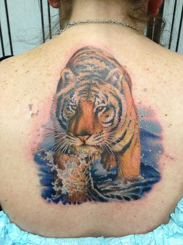 Kims Tiger