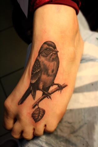 Snappy Gomez bird
