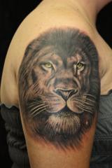 2010 lion