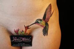 2010 Debut Hummingbird