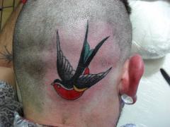Andorinha ..Bird