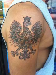 Polish Falcon