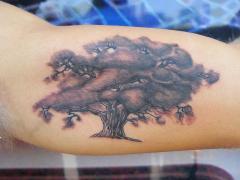 Oak tree on under arm