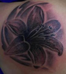 Lily design