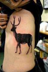 web deer ribs