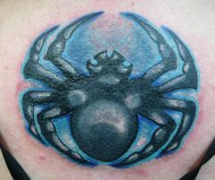 spider cover up