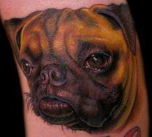 nate beavers pug dog portrait