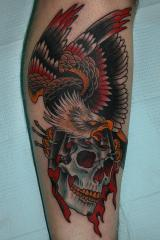 eagle skull