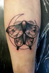Spider moth