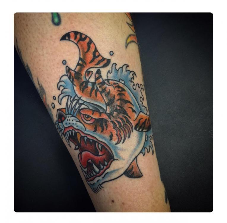 Tigershark2.jpg